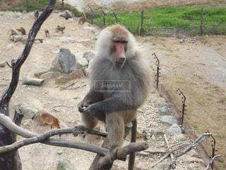 No.395885 猿