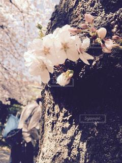 春の写真・画像素材[379863]