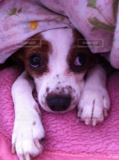 No.381783 犬