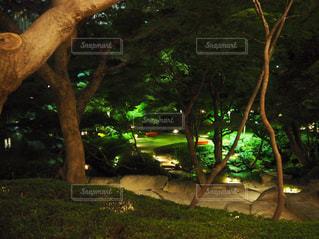 庭の写真・画像素材[382967]