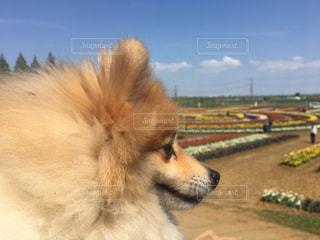 犬の写真・画像素材[452790]