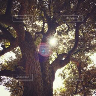 森林 - No.536629