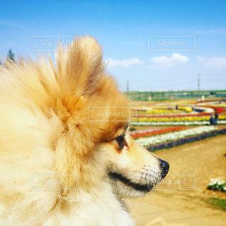 近くに犬のアップの写真・画像素材[886472]
