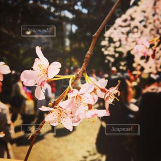 近くの花のアップの写真・画像素材[886764]