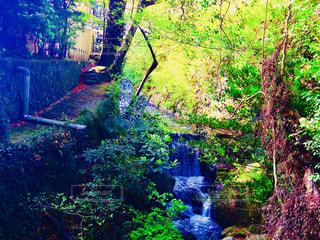 森の中の滝の写真・画像素材[1183183]