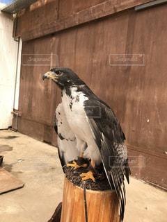 木製の表面の上に座って鳥 - No.1134711