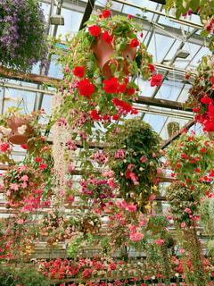 庭にピンクの花で一杯の花瓶の写真・画像素材[1134715]