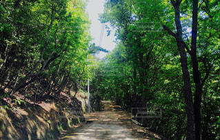 自然の写真・画像素材[380787]