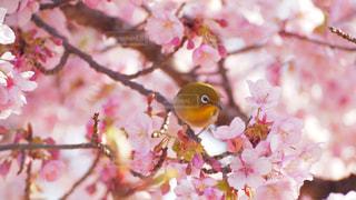 春 - No.382377