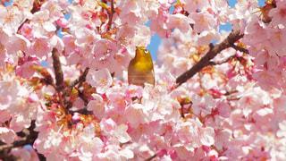 春 - No.382574