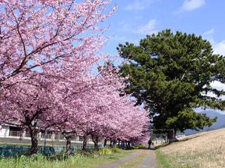 春の写真・画像素材[386150]