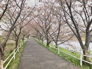 春 - No.432405