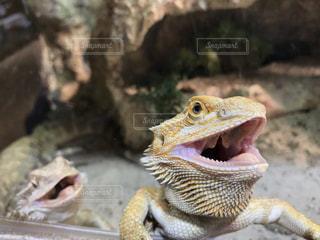 動物の写真・画像素材[457801]