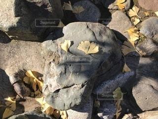岩の上に座っている鳥の写真・画像素材[911676]