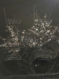 冬の写真・画像素材[381219]