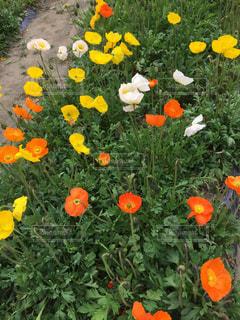 花の写真・画像素材[400083]