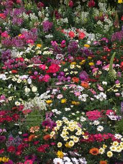 花の写真・画像素材[400101]