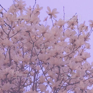 自然の写真・画像素材[381620]