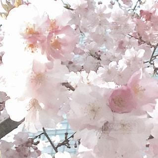 花 - No.414415