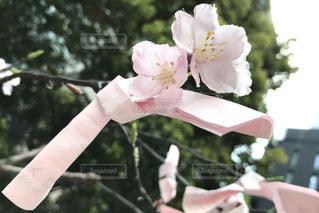 花の写真・画像素材[434448]