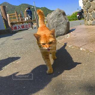 猫の写真・画像素材[476841]