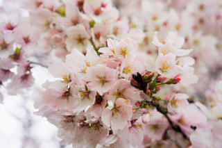 花の写真・画像素材[488492]