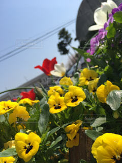 花の写真・画像素材[431602]