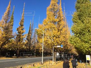 秋の写真・画像素材[392452]