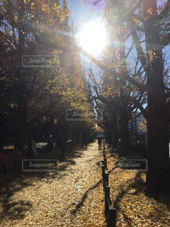 秋の写真・画像素材[392453]