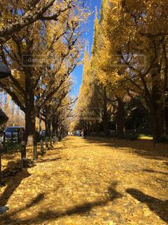 秋の写真・画像素材[392460]