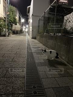 路地裏の猫の写真・画像素材[2691719]