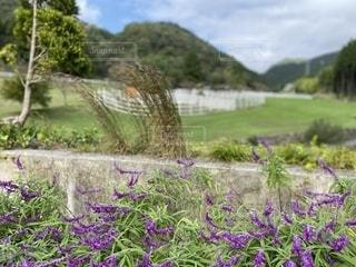 大自然に咲く花の写真・画像素材[2691725]