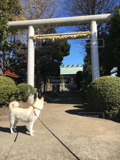 No.382190 犬