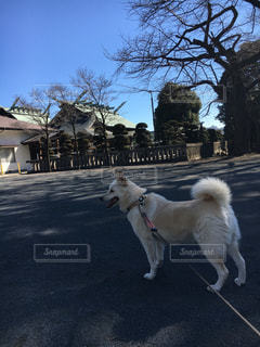 No.382191 犬
