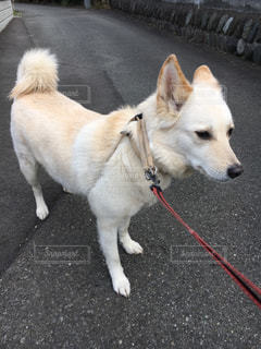 No.382194 犬