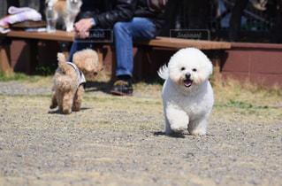 犬の写真・画像素材[381899]