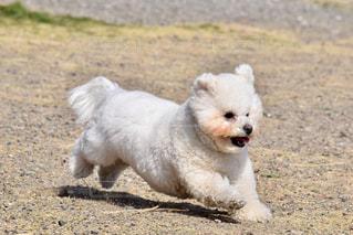 No.381904 犬