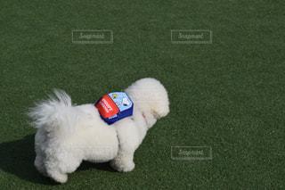 犬の写真・画像素材[397935]