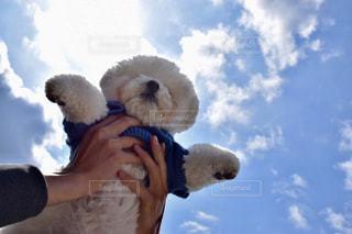 犬の写真・画像素材[400902]