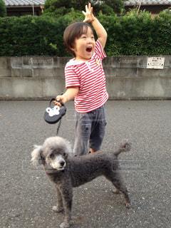 犬の写真・画像素材[384058]