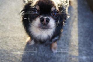 犬の写真・画像素材[382041]
