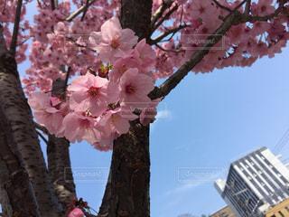春 - No.382351
