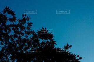 青の写真・画像素材[388598]