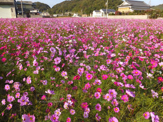 花の写真・画像素材[433845]