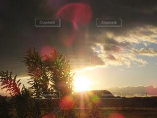背景の夕日とツリー - No.846082