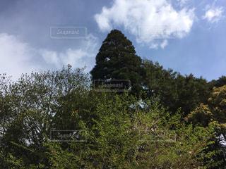 森の大きな木 - No.1123346