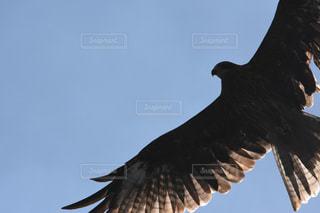 野鳥の写真・画像素材[391755]