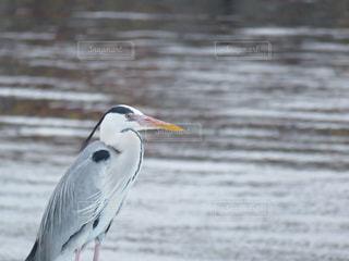 野鳥の写真・画像素材[391763]
