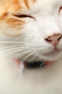 猫の写真・画像素材[382735]