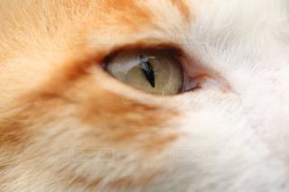 猫の写真・画像素材[382736]